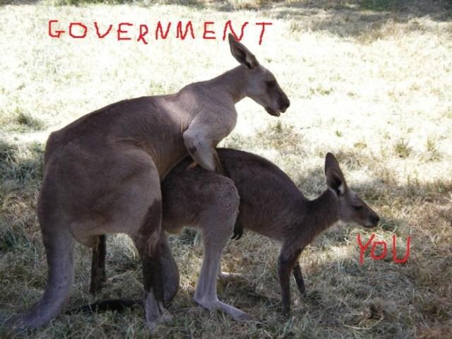 kangaroo-love.jpg (162 KB)