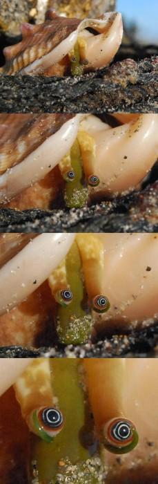 clam-eye_drama.JPG (171 KB)