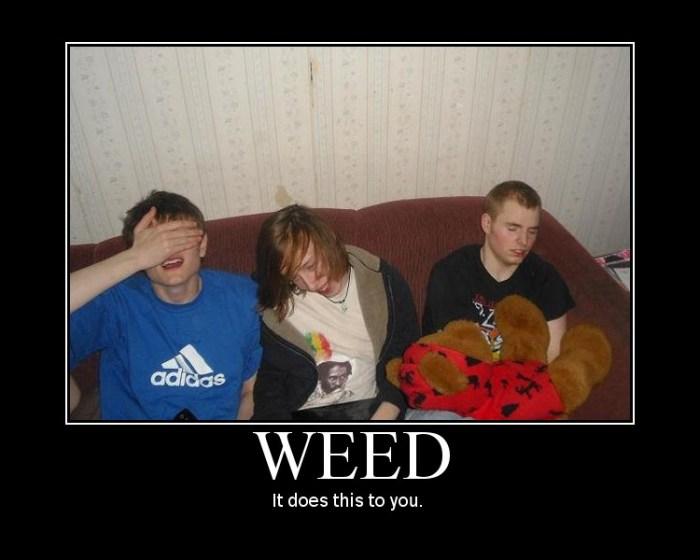 weed.jpg (69 KB)