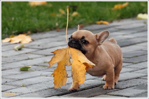 puppy.JPG (29 KB)
