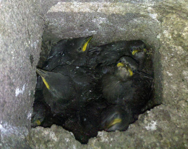 angrybirdsinahole.jpg (600 KB)