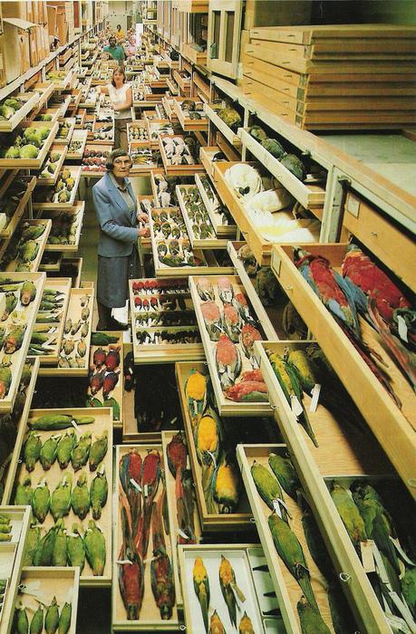 museum.jpg (299 KB)