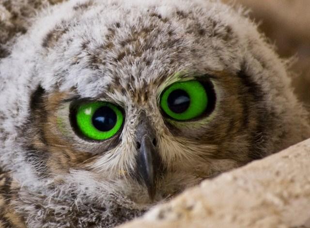 owll.jpg (1 MB)