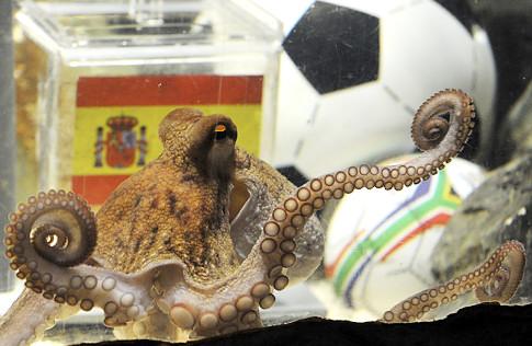 alg_octopus.jpg (66 KB)