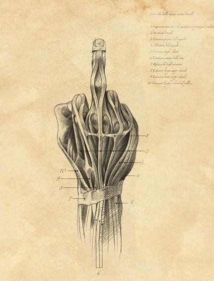 finger_anatomy.jpg (61 KB)