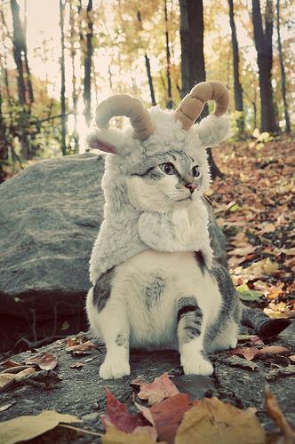catthing.jpg (150 KB)