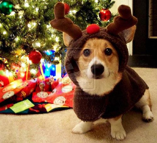 corgi_christmas.jpg (71 KB)