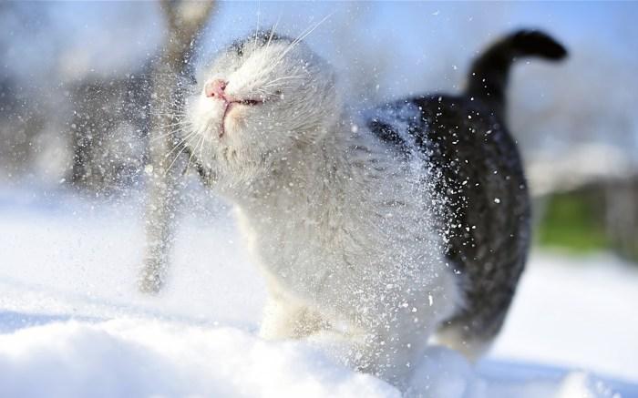 snowy.jpg (572 KB)