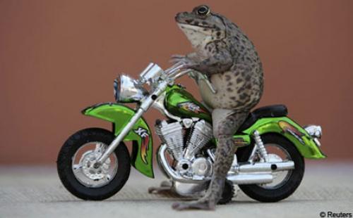 frogcaption1.jpg (26 KB)