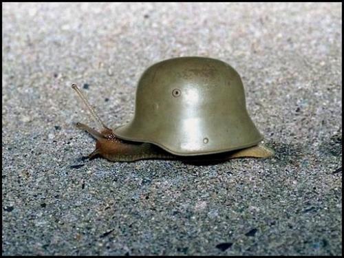 War Snail.jpg (60 KB)