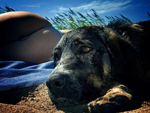 Uninterested Dog is Uninterested.jpg (101 KB)