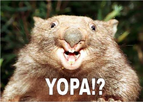 yopas.JPG (75 KB)