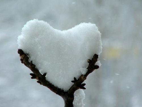 snow_heart.jpg (43 KB)