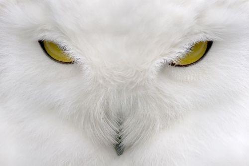 owl.jpg (42 KB)