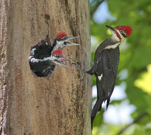 woodpecker.jpg (186 KB)