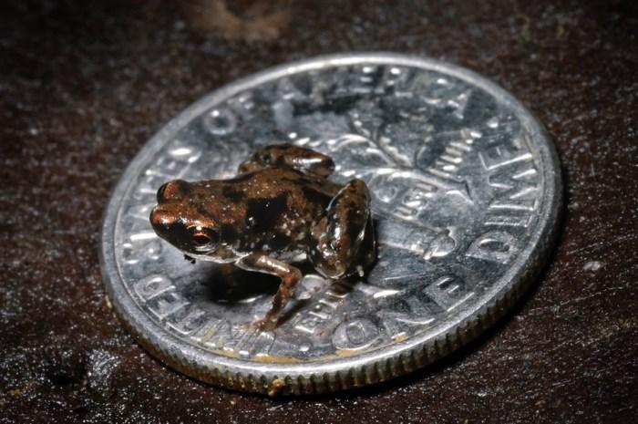 tiny_frog.jpg (450 KB)