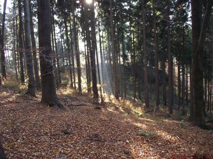 forest1.JPG (749 KB)
