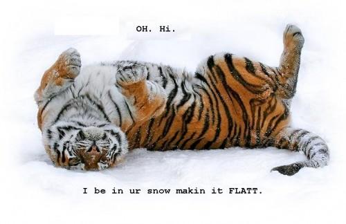 snow-tigerss.JPG (59 KB)
