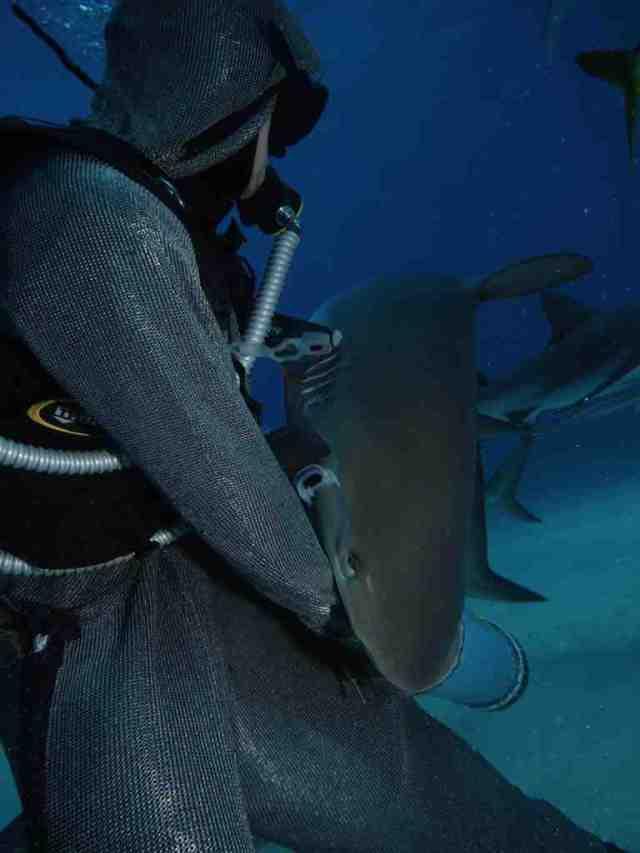 shark-bite.jpg (34 KB)