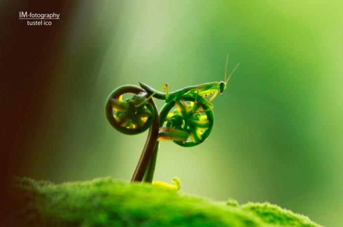 bugonabike.jpg (54 KB)