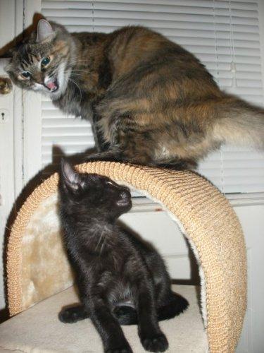 cats.jpg (59 KB)
