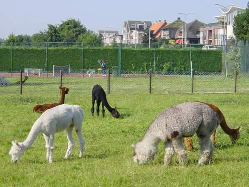 Noordwijk_NL_11.jpg (62 KB)
