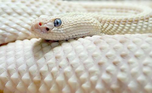 snake.jpg (174 KB)