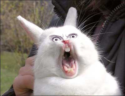 rabbit0_o.jpg (55 KB)
