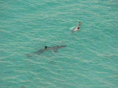 shark.jpg (58 KB)