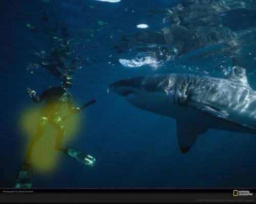 Shark!.jpg (358 KB)