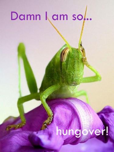 hungover.jpg (242 KB)
