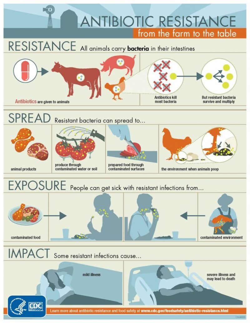 resistenza antibiotica animali