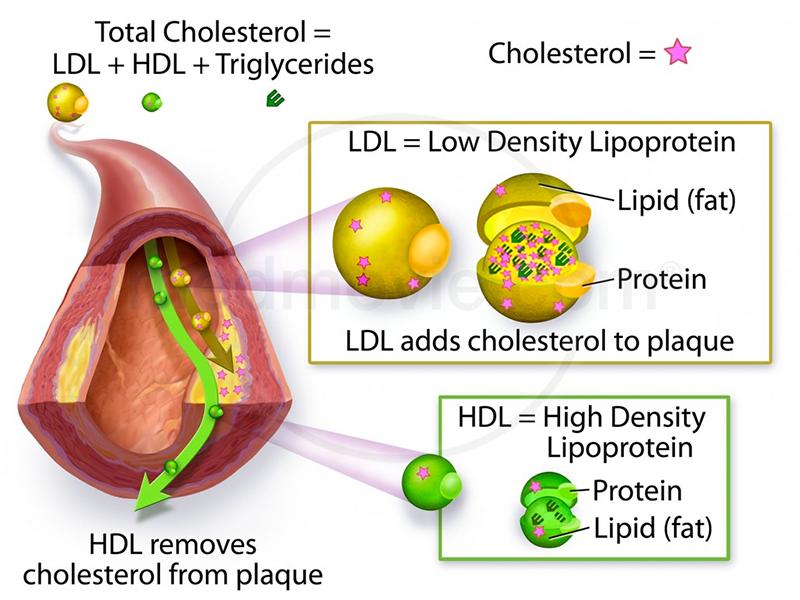 colesterolo rosso uovo