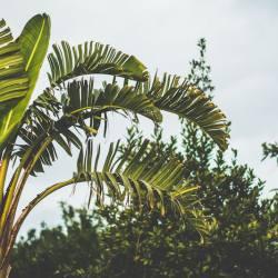 tropisch-palmbomen-bomen-groen-zon