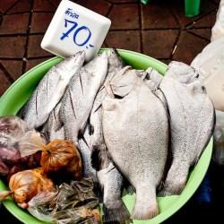 vis-eten-voeding-vissen