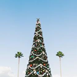 kerstboom-palmboom-kerst-feestdagen-zon-sneeuw
