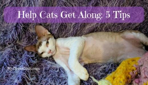 help cats get along
