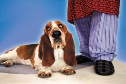 https://i1.wp.com/www.mydogmagazine.com/wp-content/uploads/2011/10/dogatownerfeetlarge.jpg?w=640