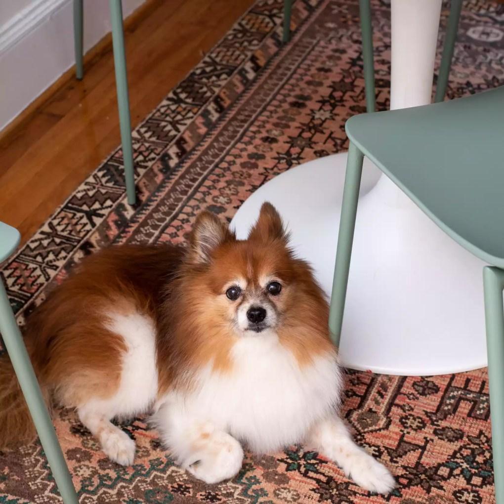 dog sitting on a vintage rug