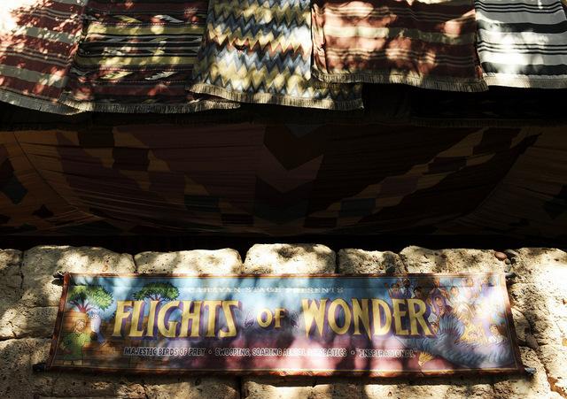 Flights of Wonder