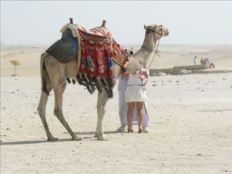 Private excursion: Cairo 2 Days sightseeing trip from Gouna by bus