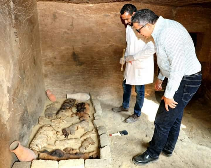 Tomb Full of Sacred Cats and Beetles Found in Sakkara 13