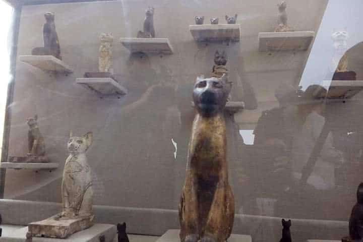 Tomb Full of Sacred Cats and Beetles Found in Sakkara 1
