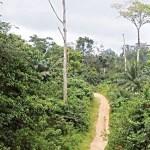 Deforestation:  Bayelsa to establish environmental guards