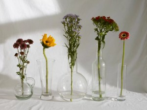 elegant various shaped glass vases with tender assorted flowers in daylight
