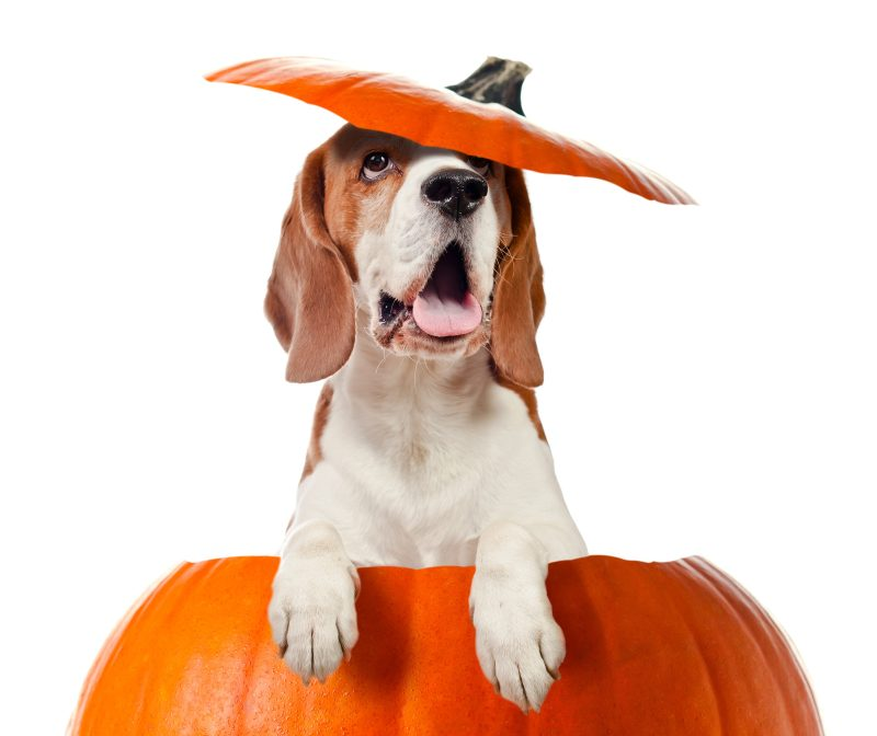 Dog training open house in Ellicott City and Columbia, Howard County, Maryland