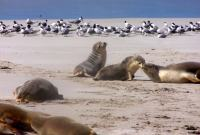 Kangaroo Island: Fabulous Wildlife Encounters & Stunning Nature