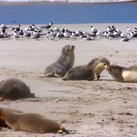 Kangaroo Island: these Fabulous Wild Encounters will be Hard to Beat
