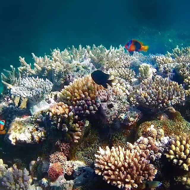 New Caledonia Things To Do - Jinek (Lifou)