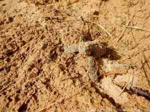 Mon Repos Bundaberg Baby Turtle in Sand